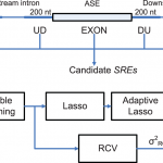 A Biophysical Model for Identifying Splicing Regulatory Elements and Their Interactions