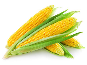 Iso-Seq analysis of SMRT sequencing data produces most detailed maize transcriptome yet