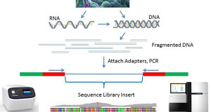 Library construction for next-generation sequencing: Overviews and challenges