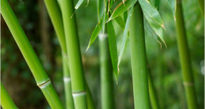 BambooGDB: a bamboo genome database with functional annotation and an analysis platform