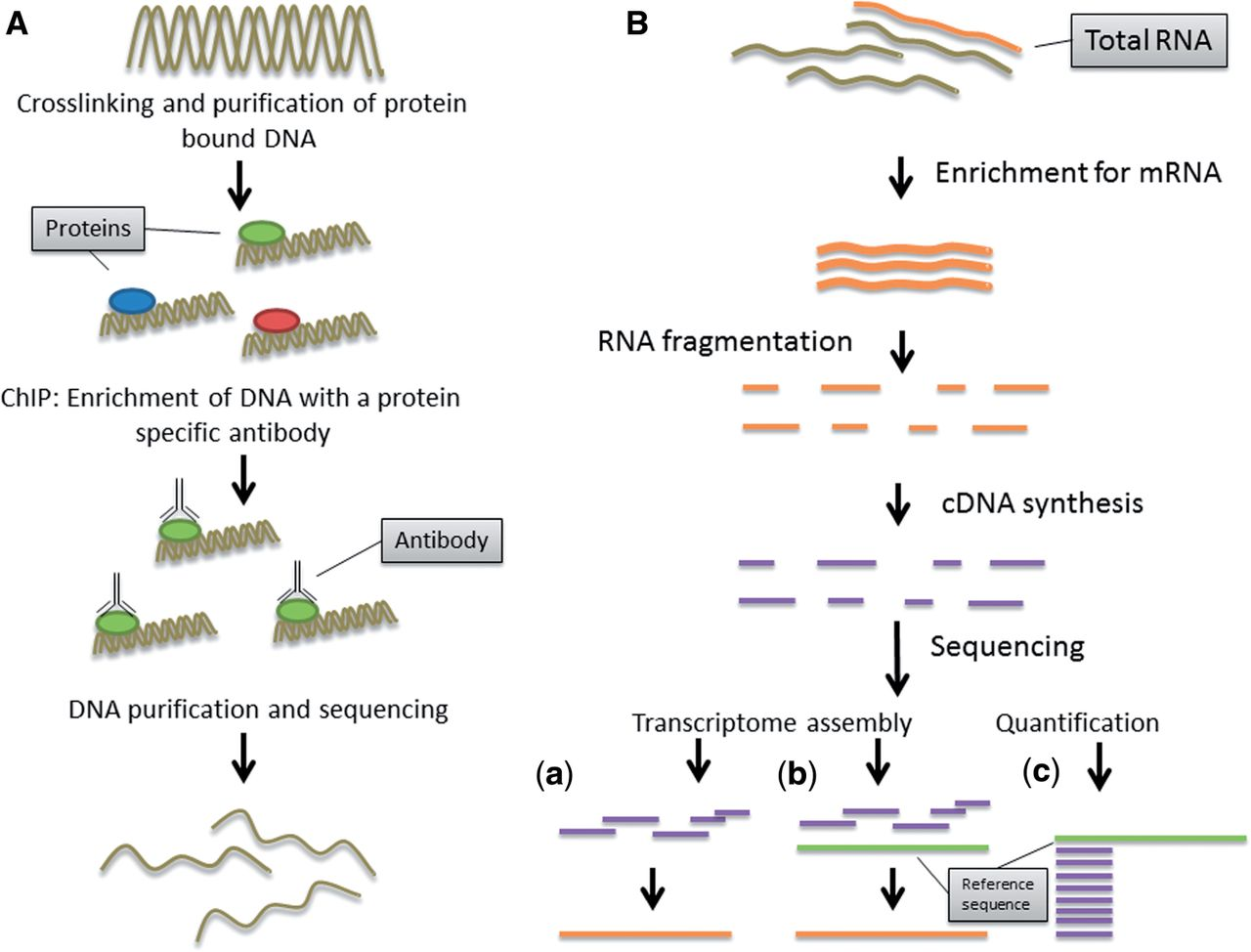Next-generation sequencing technologies and their impact on ...