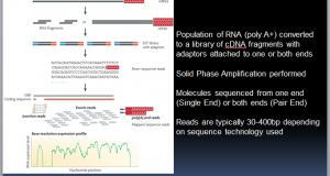 An RNA-Seq Tutorial