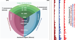 De Novo Transcriptome Assembly and Analyses of Gene Expression during Photomorphogenesis in Diploid Wheat Triticum monococcum