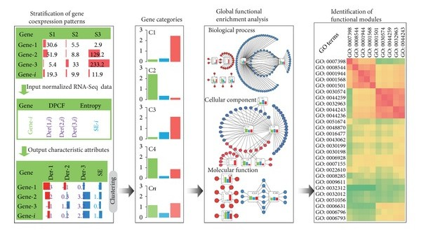 Stratification of Gene Coexpression Patterns and GO Function Mining for a RNA-Seq Data Series