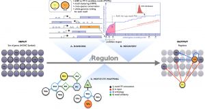 iRegulon: From a Gene List to a Gene Regulatory Network