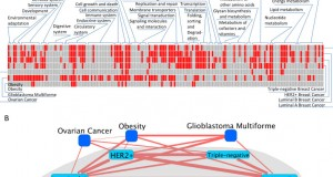 Functional characterization of breast cancer using pathway profiles