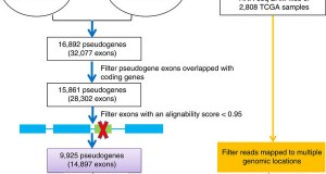 The Pan-Cancer analysis of pseudogene expression reveals biologically and clinically relevant tumour subtypes