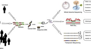 High-throughput sequencing for the study of bacterial pathogen biology