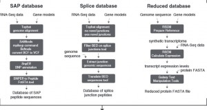 Using galaxy-P to leverage RNA-Seq for the discovery of novel protein variations