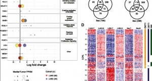 Transcriptome sequencing uncovers altered long intergenic non-coding RNAs