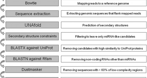 miRNEST 2.0 – a database of plant and animal microRNAs