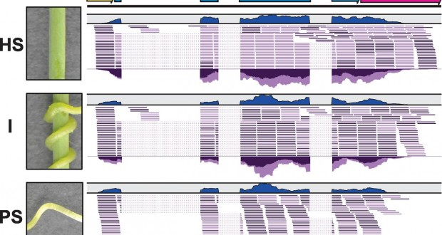 Genomic-scale exchange of mRNA between a parasitic plant and its hosts