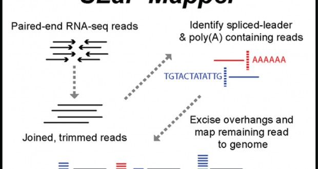 SLaP Mapper: a webserver for identifying and quantifying spliced-leader addition and polyadenylation site usage