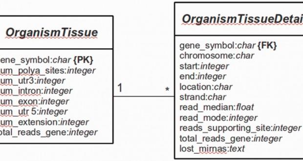 APADB: a database for alternative polyadenylation and microRNA regulation events