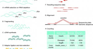 RNA sequencing – current and prospective uses in metabolic research
