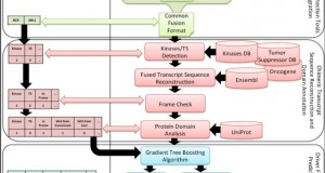 Pegasus – a comprehensive annotation and prediction tool for detection of driver gene fusions in cancer