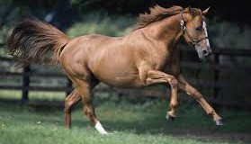 HSDB – Thoroughbred Horse Single Nucleotide Polymorphism and Expression Database