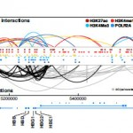 Genome-wide map of regulatory interactions in the human genome
