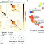 OrthoClust: an orthology-based network framework for clustering data across multiple species