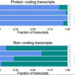 PLEK: a tool for predicting long non-coding RNAs and messenger RNAs based on an improved k-mer scheme