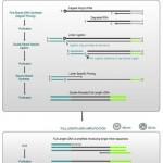 Official release of TeloPrime Full-Length cDNA Amplification Kit