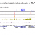 TELP – a sensitive and versatile library construction method for next-generation sequencing