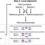 XSAnno – a framework for building ortholog models in cross-species transcriptome comparisons