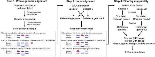 XSAnno – a framework for building ortholog models in cross-species transcriptome comparisons