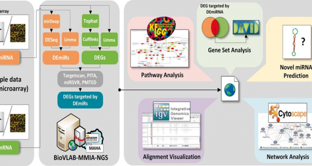 BioVLAB-MMIA-NGS – MicroRNA-mRNA Integrated Analysis using High Throughput Sequencing Data