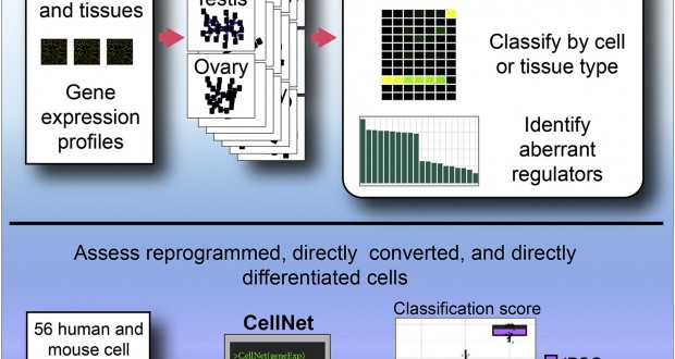 CellNet – network biology applied to stem cell engineering
