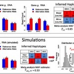 MBASED – allele-specific expression detection in cancer tissues and cell line