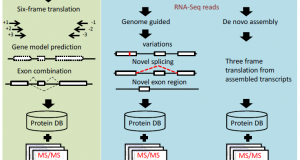 Leveraging the complementary nature of RNA-Seq and shotgun proteomics data