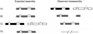 Extensive Error in the Number of Genes Inferred from Draft Genome Assemblies