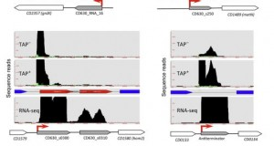 dRNA-Seq – Riboswitch Discovery by Combining RNA-Seq and Genome-Wide Identification of Transcriptional Start Sites
