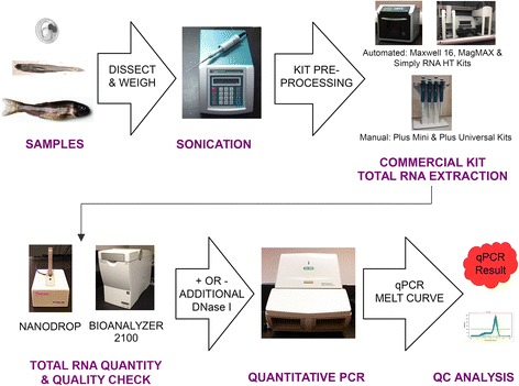 A comparison of commercially-available total RNA extraction kits