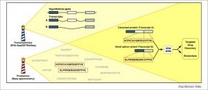 Strategies for transcriptional splice variant detection