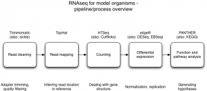 Workshop Materials – mRNA-Seq at Michigan State University