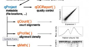 QuasR – Quantification and annotation of short reads in R