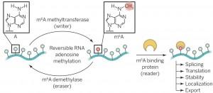Roadmap to the epitranscriptome