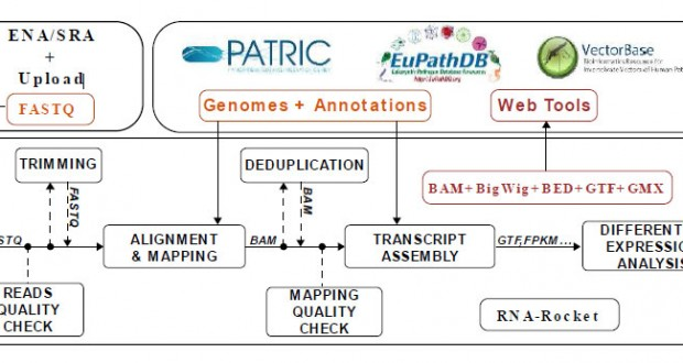 RNA-Rocket – An RNA-Seq Analysis Resource for Infectious Disease Research