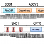 TRUP- Identification of novel fusion genes using breakpoint assembly of RNA-Seq data