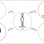 The RNA structurome – transcriptome-wide structure probing with next-generation sequencing