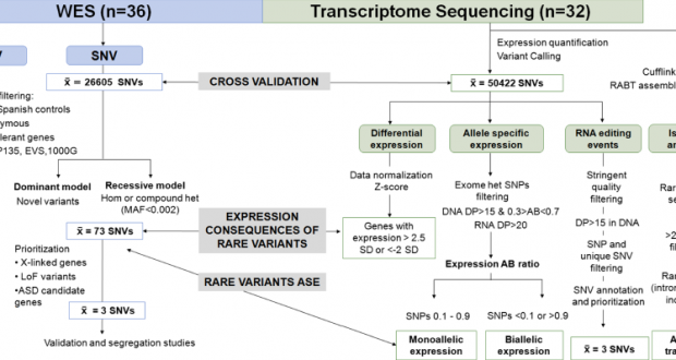 RNA-Seq allows the identification of intronic causative mutations missed by the usual filtering of Whole Exome Sequencing
