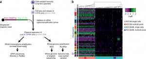G&T-seq – Parallel sequencing of DNA and RNA provides insight into secret world of cells