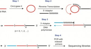 RC-Seq – Intramolecular RNA circularization for increased efficiency of RNA-Seq library prep