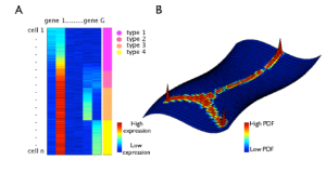 Diffusion maps for high-dimensional single-cell analysis of differentiation data
