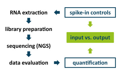 Figure 1 |  Application of spike-in mixes to evaluate RNA sequencing work-flows.