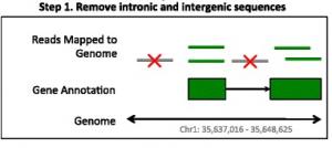 JAFFA – High sensitivity transcriptome-focused fusion gene detection