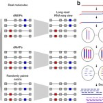 Comprehensive transcriptome analysis using synthetic long-read sequencing reveals molecular co-association of distant splicing events