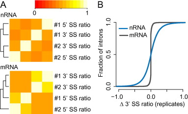 Quantification of co-transcriptional splicing from RNA-Seq data